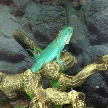 Treasure Chest Aquarium Pets 31 Photos Pet Shops