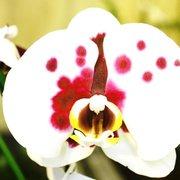 Schwerter Orchideenzucht, Schwerte/Ruhr, Nordrhein-Westfalen