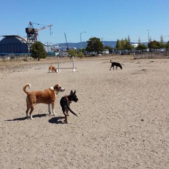 Main Street Dog Park Alameda