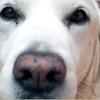 Mission Pet Hospital: Dog Grooming