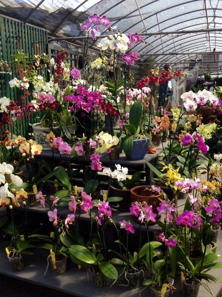 Hyams Landscaping And Garden Center : Hyams landscaping and garden center gardening centres