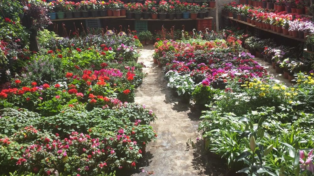 Vivero santa rosa viveros y jardiner a oaxaca for Viveros en oaxaca
