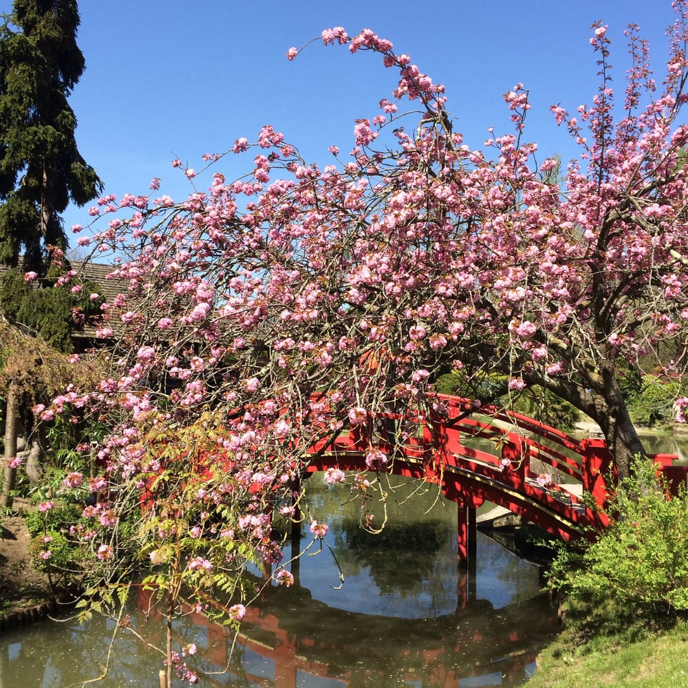 Jardin japonais 71 photos parc compans cafarelli for O jardin gourmand toulouse