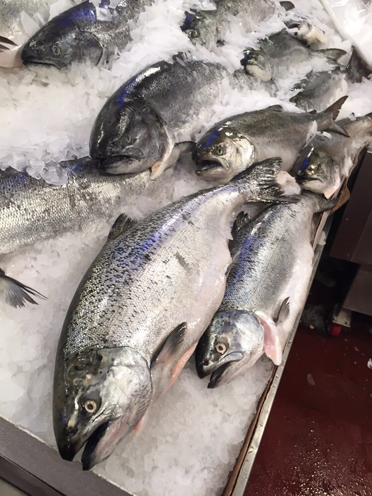 Very large salmon animals for your selection yelp for Pure food fish market