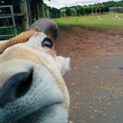 Inquisitive animals!