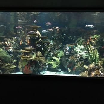 Ripley S Aquarium Of Myrtle Beach 261 Photos Aquariums