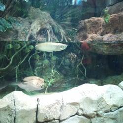 au fond, les piranhas