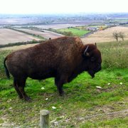 Whipsnade Wild Animal Park, Dunstable, Central Bedfordshire, UK