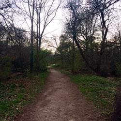 Endless paths in the woods