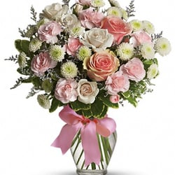 Treeland Florists & Greenhouses - Cotton Candy - New Bedford, MA, Vereinigte Staaten