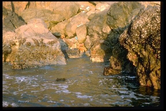 rocky point hot springs - muir beach  ca