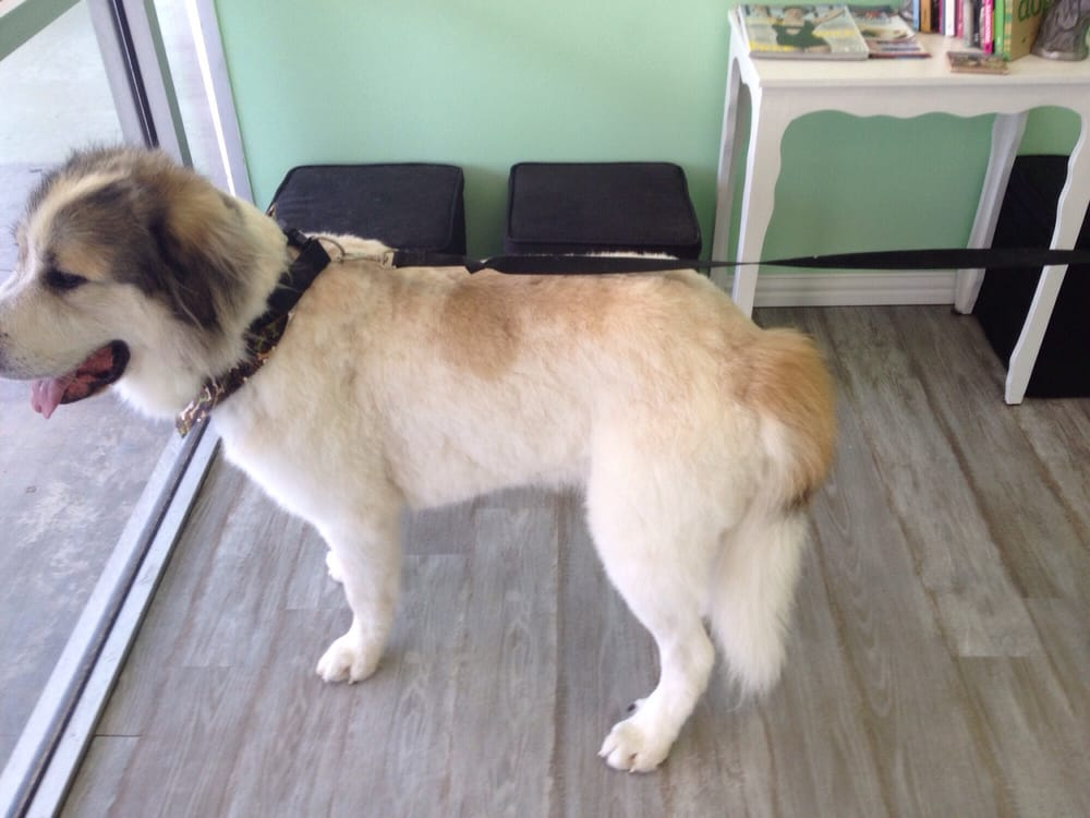 Hot Dog Grooming Wilcrest