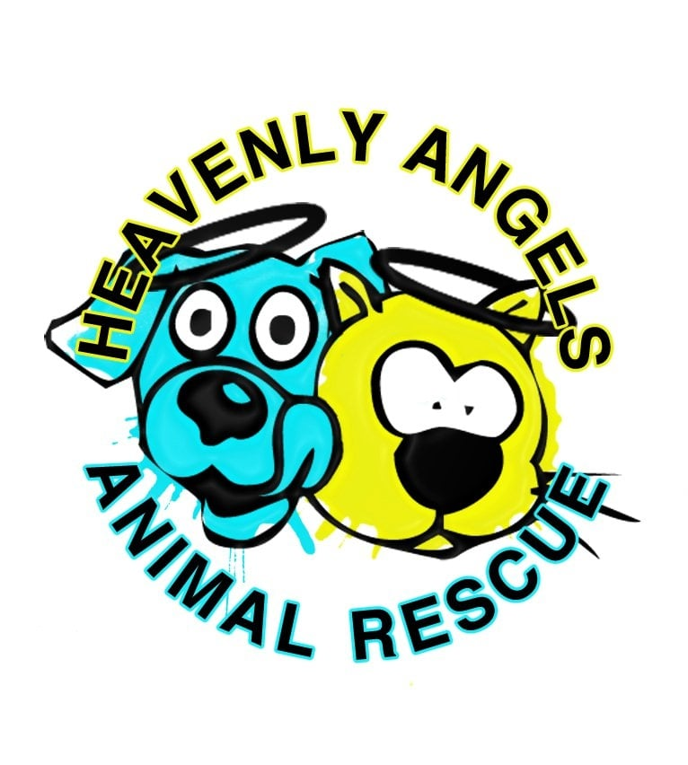 Ozone Park (NY) United States  City pictures : Heavenly Angels Animal Rescue Ozone Park, NY, United States