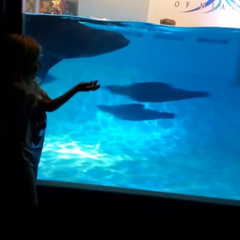 Aquarium Of Niagara 92 Photos 40 Reviews Aquariums