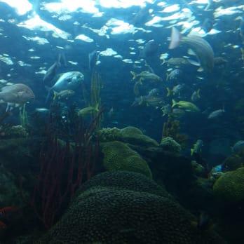 The Florida Aquarium Tampa Fl United States Inside