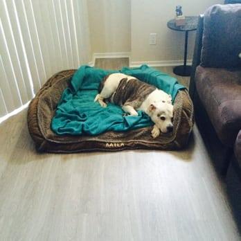 Best Dog Groomer In Long Beach Ca
