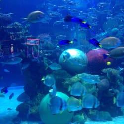 The aquarium at the silverton hotel 116 photos for Tropical fish las vegas