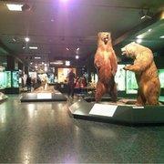 Aus Stellung im zoologischen Museum