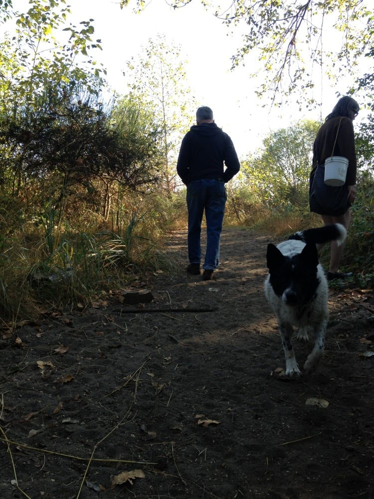 How To Start A Dog Walking Business Canada