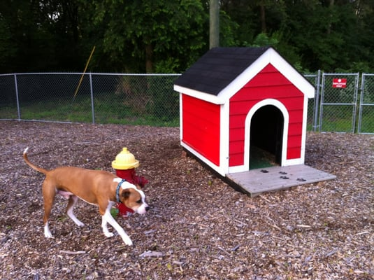 Red dog pet resort spa pet boarding pet sitting for Red dog daycare