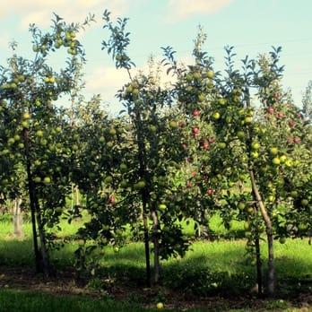 Pine Tree Apple Orchards - 54 Photos - Bakeries - White Bear Lake, MN - Reviews - Yelp