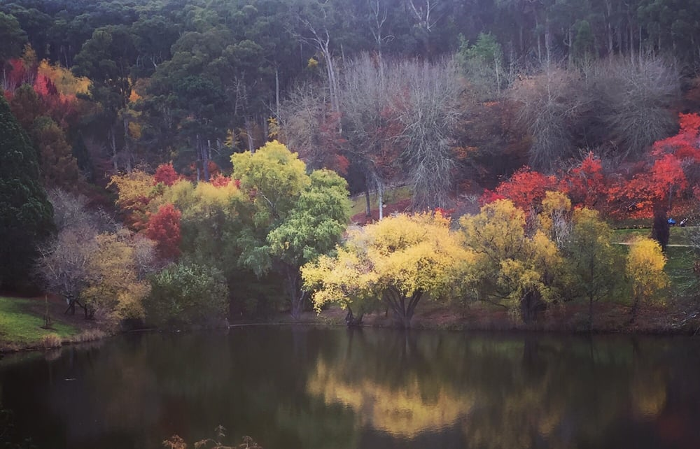 Mount Lofty Botanic Garden Botanical Gardens Mount