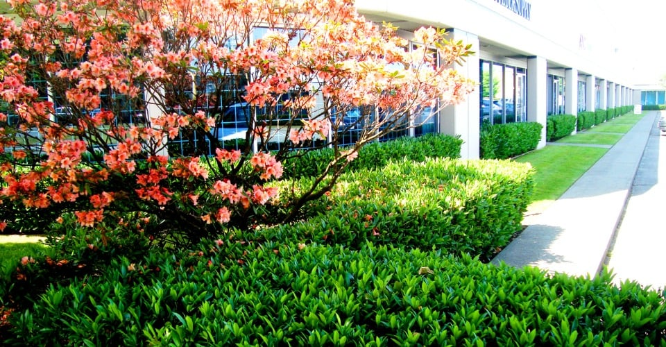 Beaver landscape landscaping richmond bc photos yelp for Garden design richmond va
