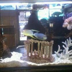 Atlantis tropical fish aquariums closed las vegas for Tropical fish las vegas