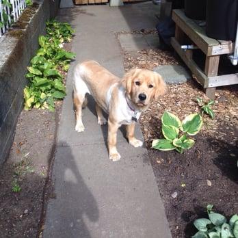 Dog Grooming Greenlake