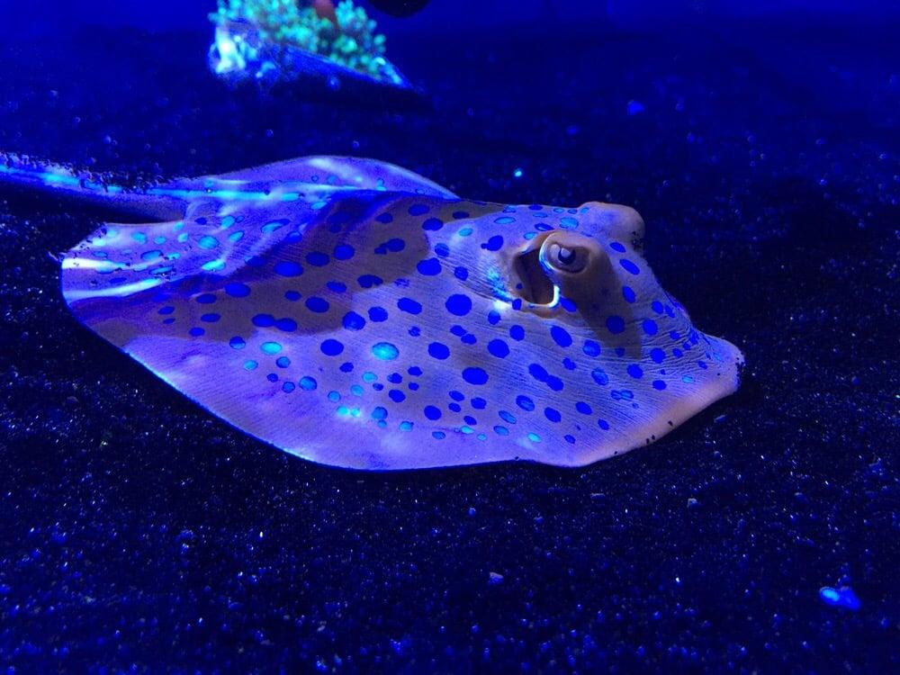 Z Fish Inc Ultragem Fish  amp Coral Inc