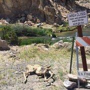 Hot Creek Ranch - Mammoth Lakes, CA, États-Unis