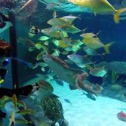 Florida Keys Aquarium Encounters 106 Photos Aquariums