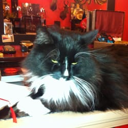 Eden - The store cat is so fluffy and beautiful..meow - Portland, OR, Vereinigte Staaten