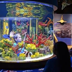 South Florida Science Center And Aquarium 80 Photos