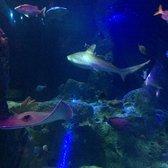 Sea Life Aquarium 130 Photos 95 Reviews Aquariums