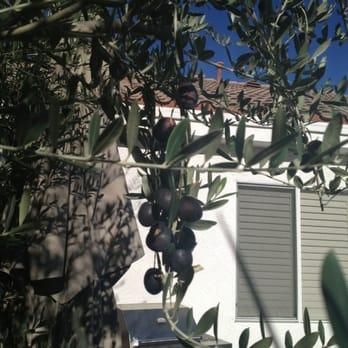 Moon Valley Nurseries Nurseries Gardening Las Vegas Nv Yelp