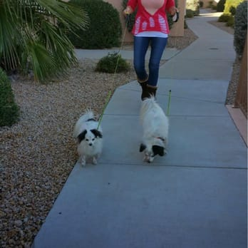 Fountain hills pet care