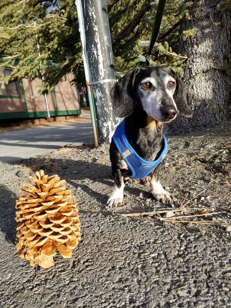 Little Paws Pet Care: Mammoth Lakes, CA