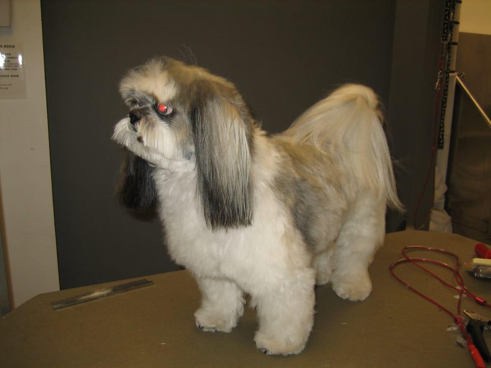 woof dog shoppe 14 photos 19 reviews pet groomers 1905 w 1st avenue kitsilano. Black Bedroom Furniture Sets. Home Design Ideas