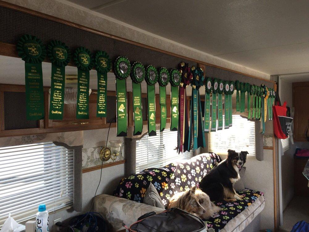 Santa Clarita Valley Dog Agility Club: 18171 Lost Creek Rd, Saugus, CA