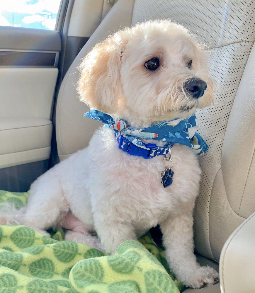 Styl'n Companions Pet Spa: 13844 W Greenfield Ave, Brookfield, WI