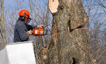 Langford Tree Service: 2118 Morton Ave, Des Moines, IA