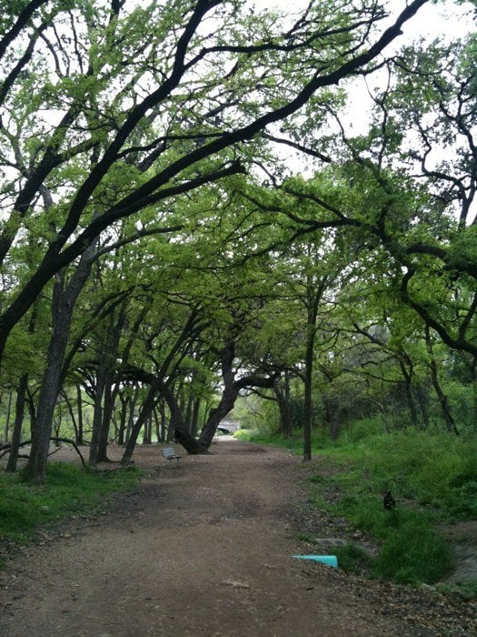 Shoal Creek Yelp