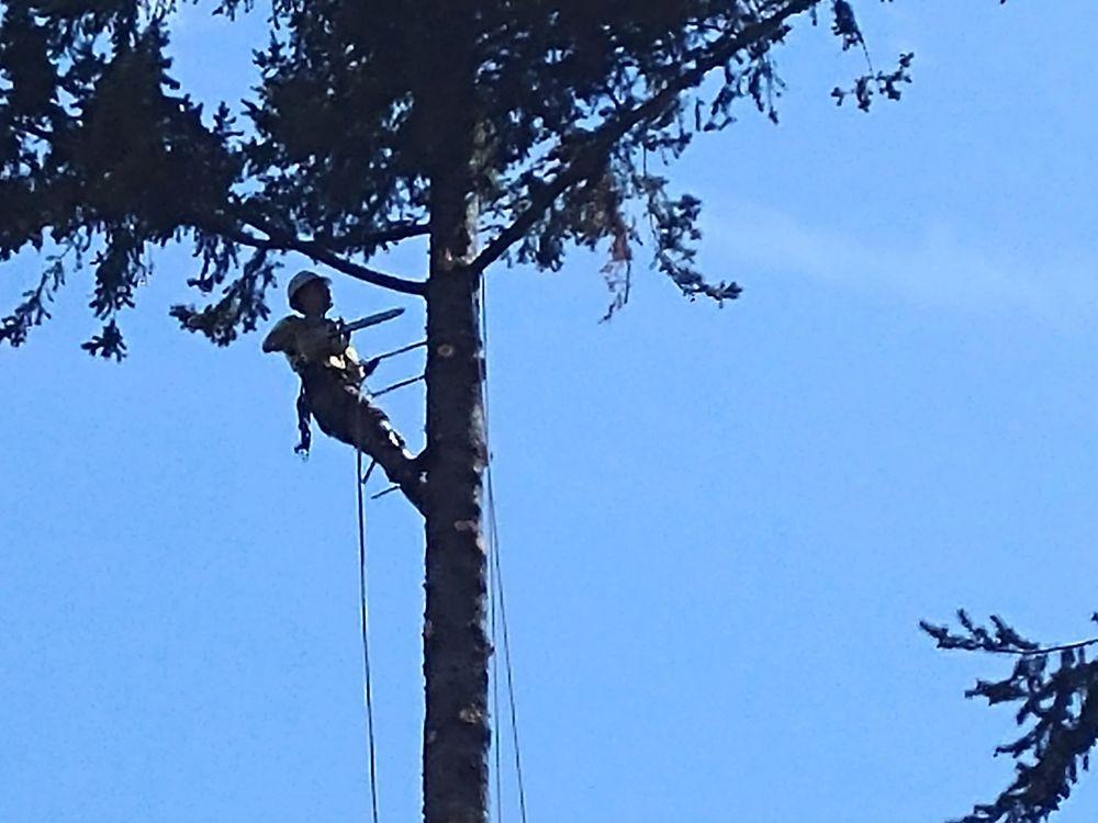 Joaquins Tree Expert: Puyallup, WA