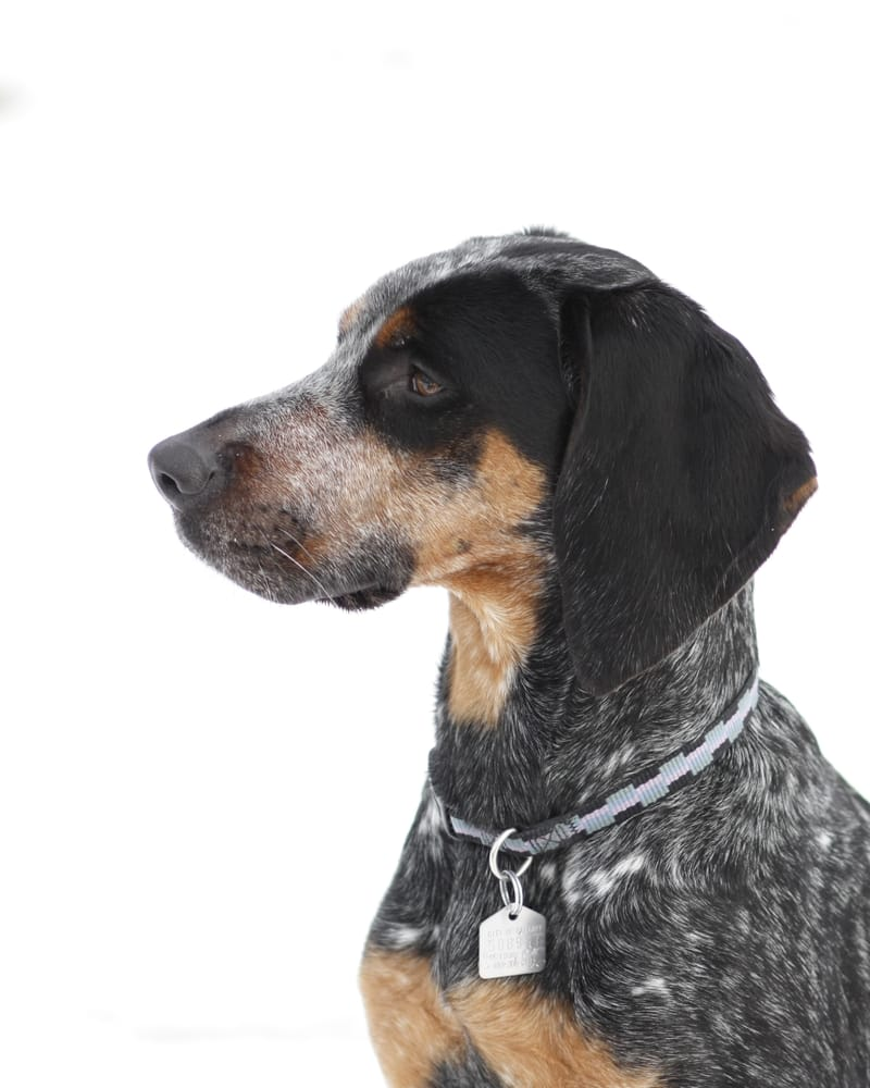 Calgary Dog Training Reviews