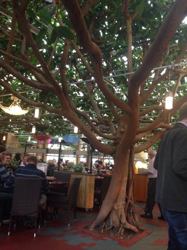 Bambus Garten Düsseldorf photos for bambus garten yelp