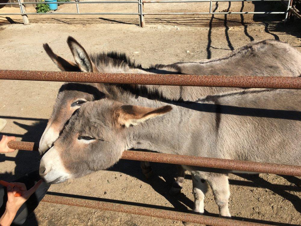 Photo of Ember Ridge Equestrian Center: Moss Beach, CA