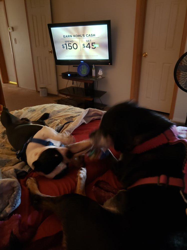 Lake Hickory Veterinary Hospital: 4607 Hickory Blvd, Granite Falls, NC