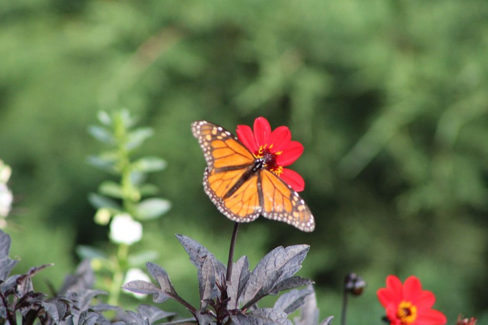 Social Spots from Sunken Gardens