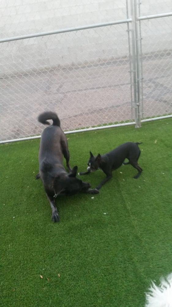 Dog Kennels Yuma Az